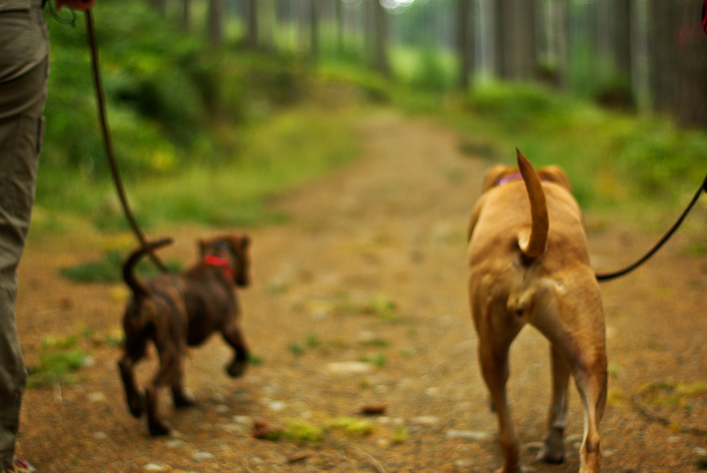 dogs walking in woods